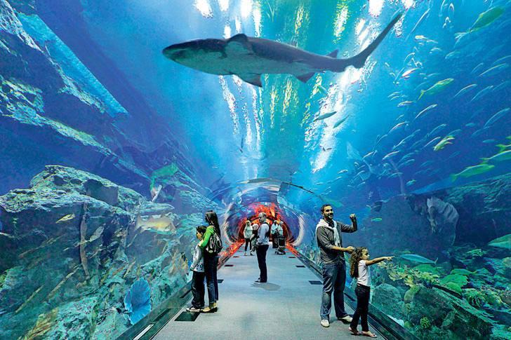 Dubai Aquarium to visit in 48free hours of uae transit visa